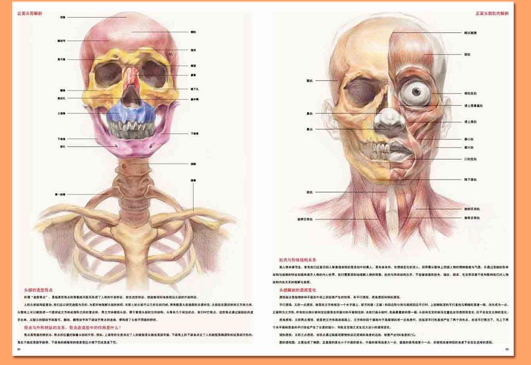 解剖素描头像_04.jpg
