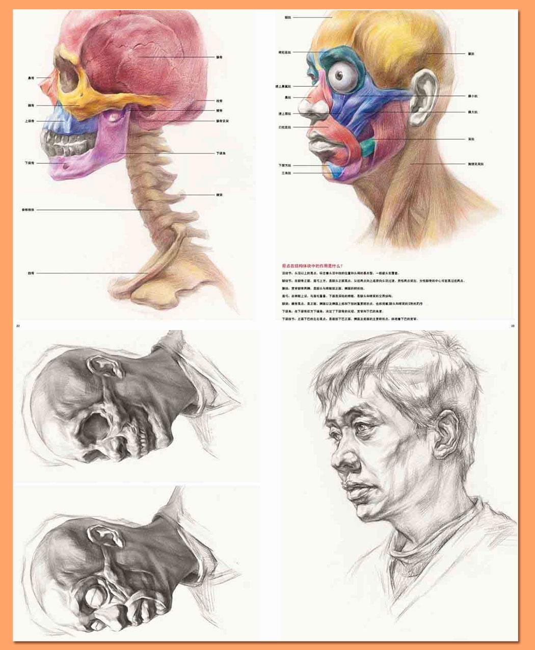 解剖素描头像_11.jpg