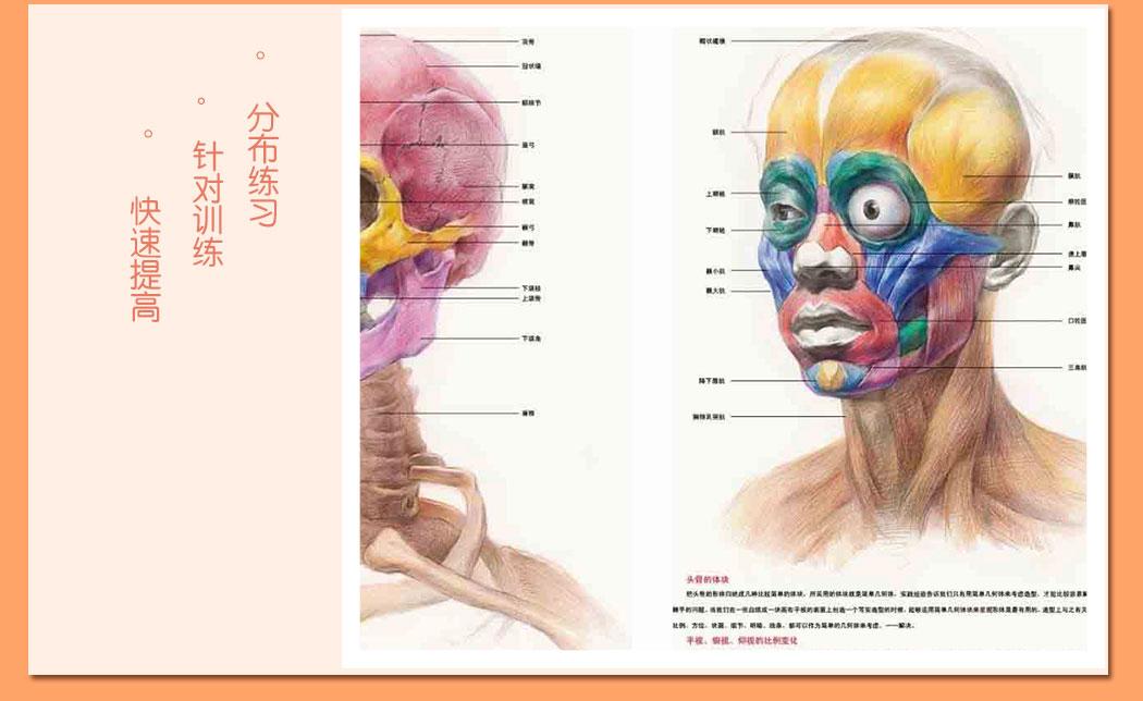 解剖素描头像_08.jpg