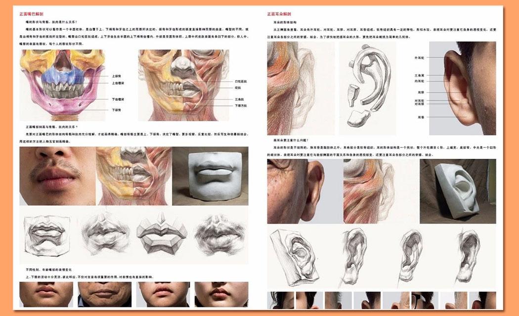 解剖素描头像_07.jpg