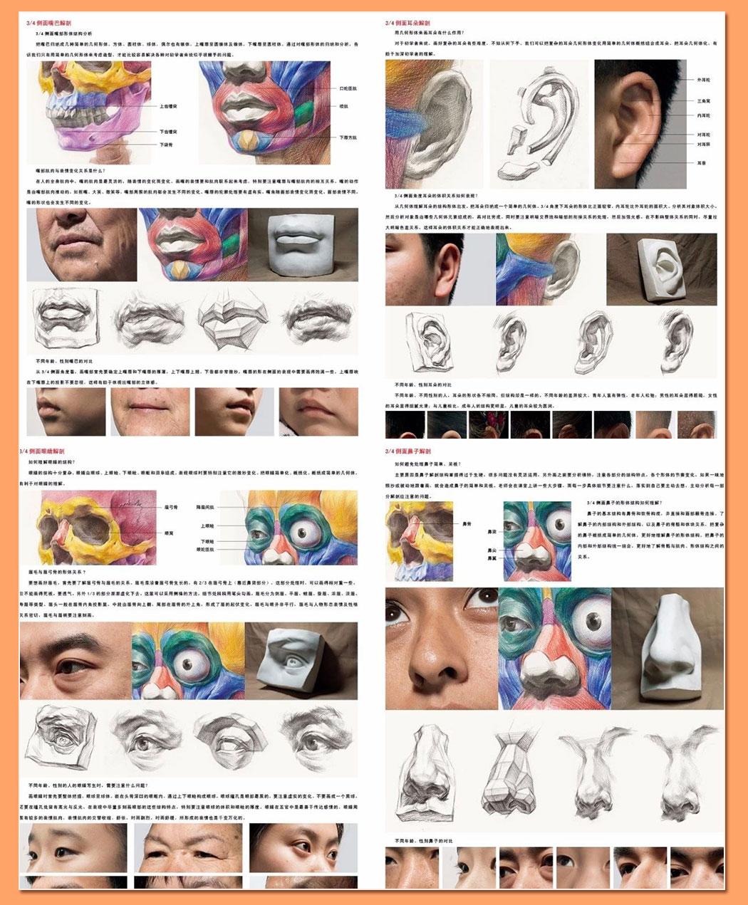 解剖素描头像_10.jpg